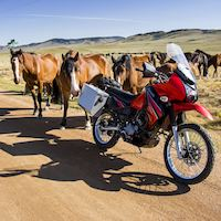 My KLR and some horses